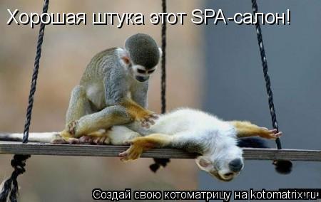 Котоматрица: Хорошая штука этот SPA-салон!