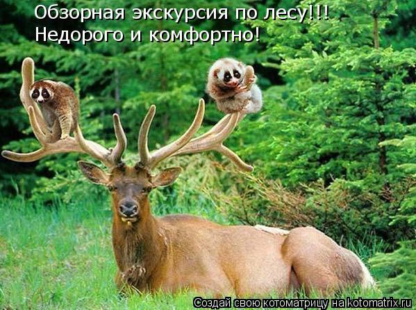 Котоматрица: Обзорная экскурсия по лесу!!!  Недорого и комфортно!