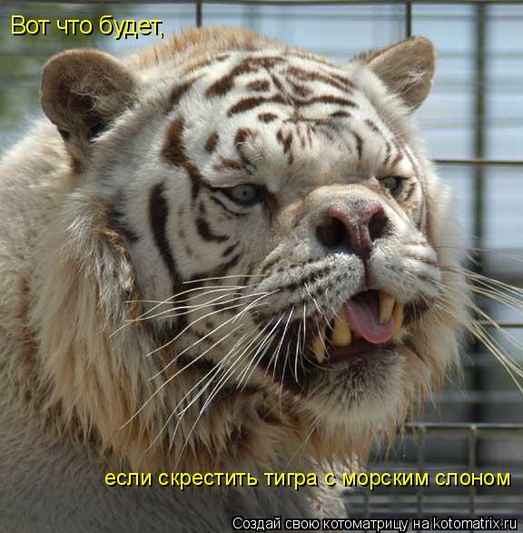 Котоматрица: Вот что будет,  если скрестить тигра с морским слоном