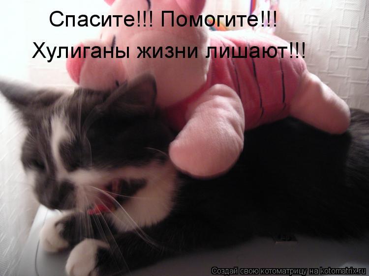 Котоматрица: Спасите!!! Помогите!!! Хулиганы жизни лишают!!!