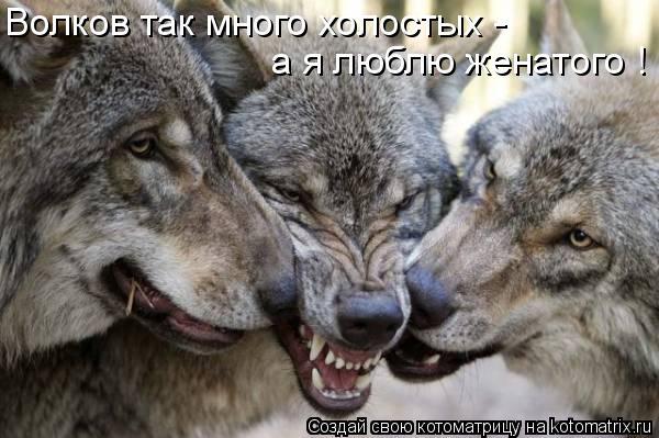 Котоматрица: Волков так много холостых -  а я люблю женатого !