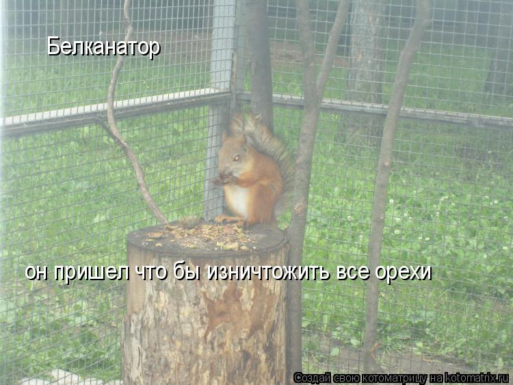 Котоматрица: Белканатор он пришел что бы изничтожить все орехи