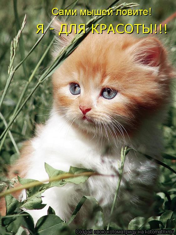 Котоматрица: Сами мышей ловите! Я - ДЛЯ КРАСОТЫ!!!