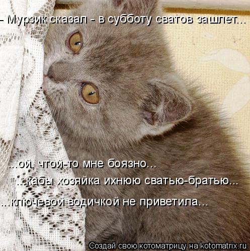 Котоматрица: - Мурзик сказал - в субботу сватов зашлет... ...ой, чтой-то мне боязно... ...кабы хозяйка ихнюю сватью-братью... ...ключевой водичкой не приветила...
