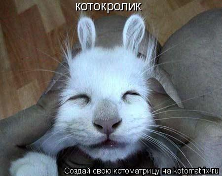 Котоматрица: котокролик