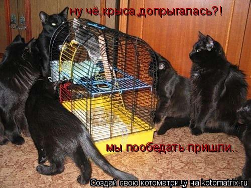 Котоматрица: ну чё,крыса,допрыгалась?! мы пообедать пришли..