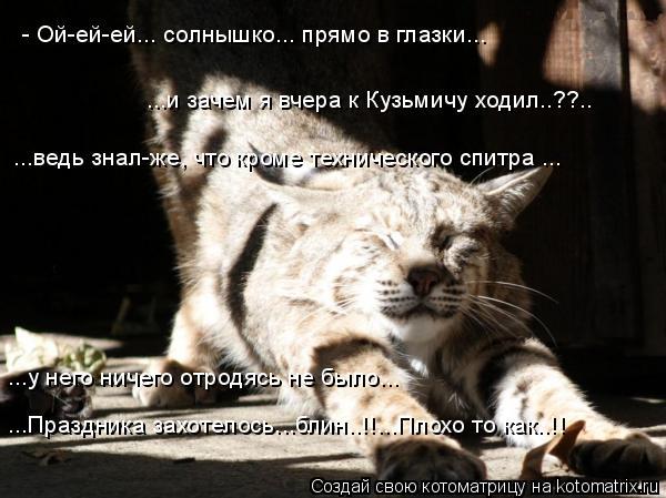 Котоматрица: - Ой-ей-ей... солнышко... прямо в глазки... ...и зачем я вчера к Кузьмичу ходил..??.. ...ведь знал-же, что кроме технического спитра ... ...у него нич