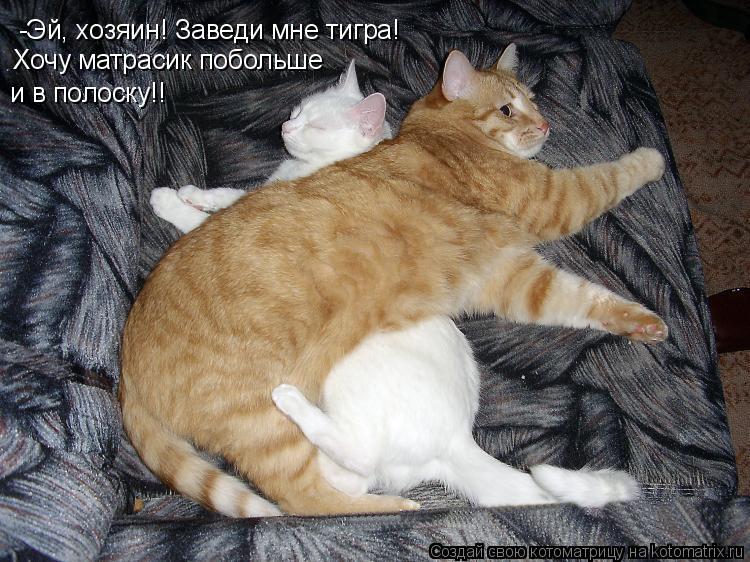 Котоматрица: -Эй, хозяин! Заведи мне тигра! Хочу матрасик побольше и в полоску!!