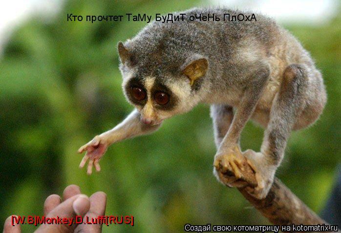 Котоматрица: Кто прочтет ТаМу БуДиТ оЧеНь ПлОхА [W.B]Monkey.D.Luffi[RUS]