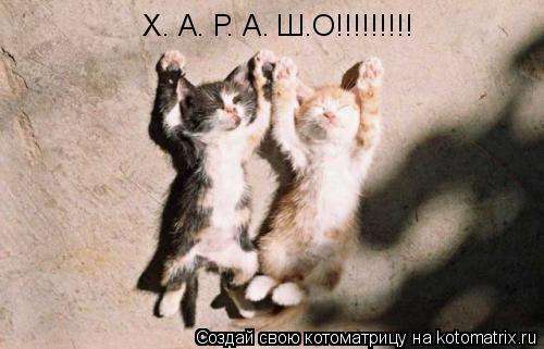 Котоматрица: Х. А. Р. А. Ш.О!!!!!!!!!