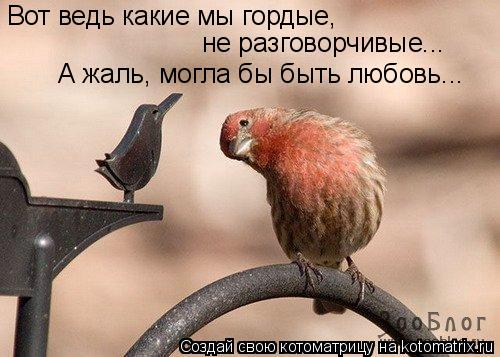 Котоматрица: Вот ведь какие мы гордые, не разговорчивые... А жаль, могла бы быть любовь...
