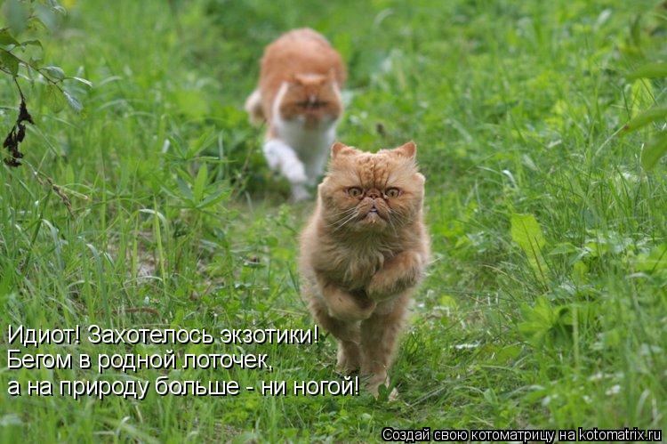 Котоматрица: Идиот! Захотелось экзотики! Бегом в родной лоточек, а на природу больше - ни ногой!