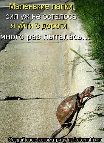Котоматрица: Маленькие лапки,  сил уж не осталось я уйти с дороги много раз пыталась...