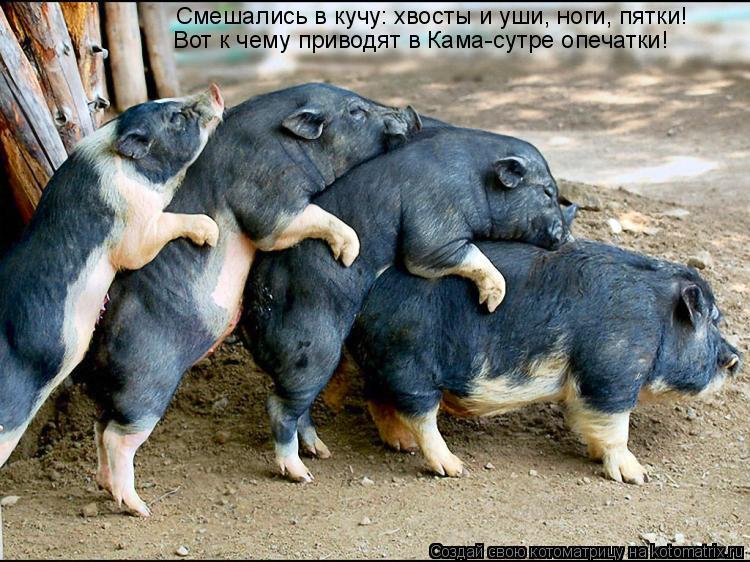 Котоматрица: Смешались в кучу: хвосты и уши, ноги, пятки! Вот к чему приводят в Кама-сутре опечатки!