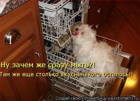 Котоматрица: Ну зачем же сразу мыть?! Там же еще столько вкусненького осталось!! Там же еще столько вкусненького осталось!!