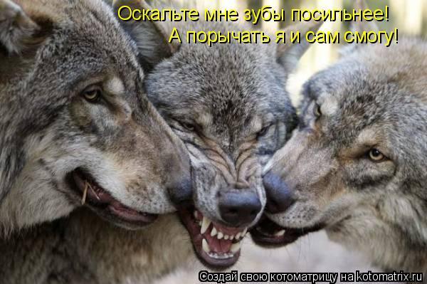 Котоматрица: Оскальте мне зубы посильнее! А порычать я и сам смогу!