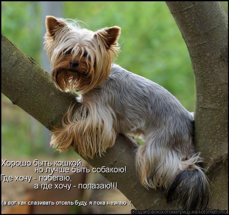 Котоматрица: Хорошо быть кошкой, но лучше быть собакою! Где хочу - побегаю, а где хочу - полазаю!!! (а вот как слазивать отсель буду, я пока незнаю :(