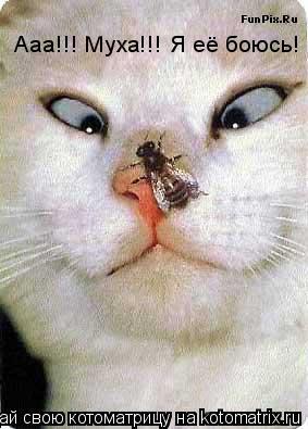 Котоматрица: Ааа!!! Муха!!! Я её боюсь!