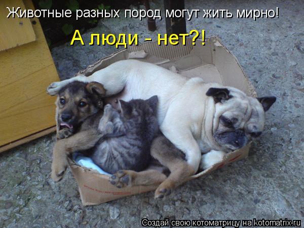 Котоматрица: Животные разных пород могут жить мирно! А люди - нет?!