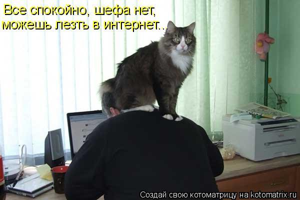 Котоматрица: Все спокойно, шефа нет,  можешь лезть в интернет...