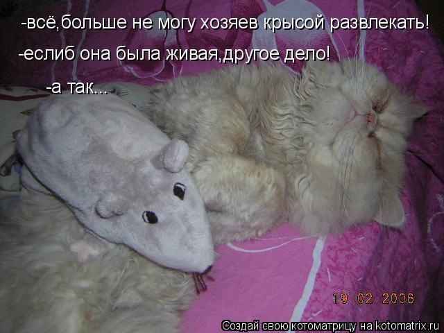 Котоматрица: -всё,больше не могу хозяев крысой развлекать! -еслиб она была живая,другое дело! -а так...