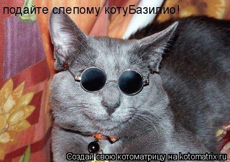 Котоматрица: подайте слепому котуБазилио!