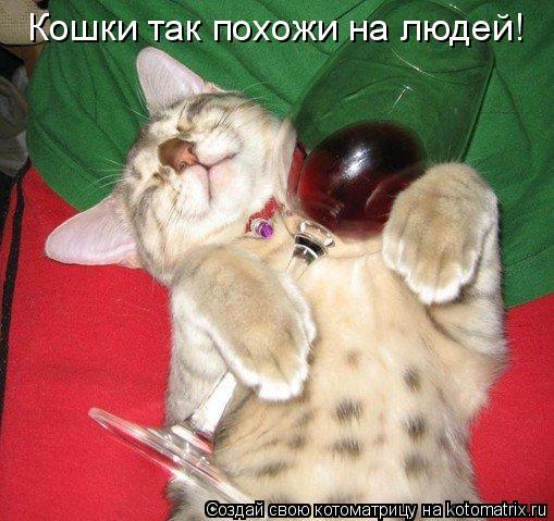 Котоматрица: Кошки так похожи на людей!