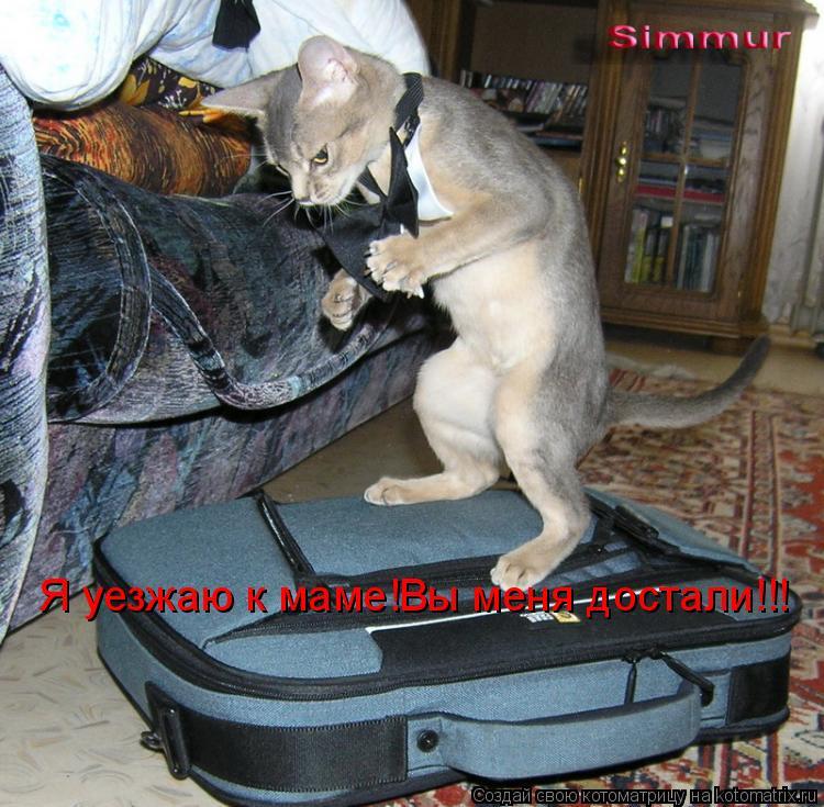 Котоматрица: Я уезжаю к маме!Вы меня достали!!!