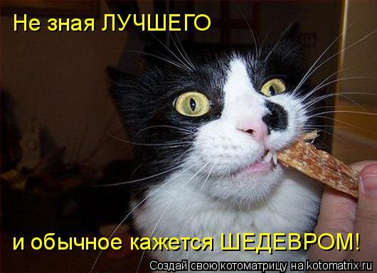 Котоматрица: Не зная ЛУЧШЕГО и обычное кажется ШЕДЕВРОМ!