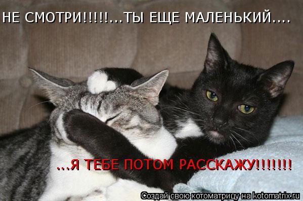 Котоматрица: НЕ СМОТРИ!!!!!...ТЫ ЕЩЕ МАЛЕНЬКИЙ.... ...Я ТЕБЕ ПОТОМ РАССКАЖУ!!!!!!!