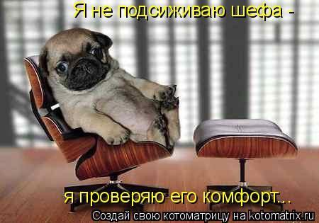 Котоматрица: Я не подсиживаю шефа - я проверяю его комфорт...