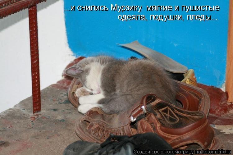 Котоматрица: ...и снились Мурзику  мягкие и пушистые  одеяла, подушки, пледы...