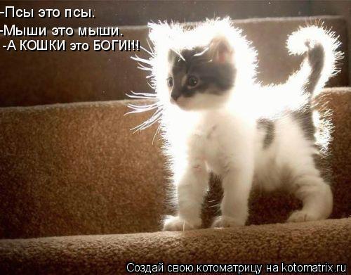Котоматрица: -Псы это псы. -Мыши это мыши. -А КОШКИ это БОГИ!!!
