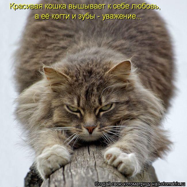 Котоматрица: Красивая кошка вышывает к себе любовь, а её когти и зубы - уважение...