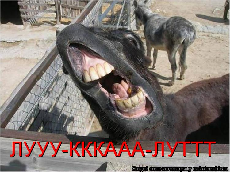 Котоматрица: ЛУУУ-КККААА-ЛУТТТ