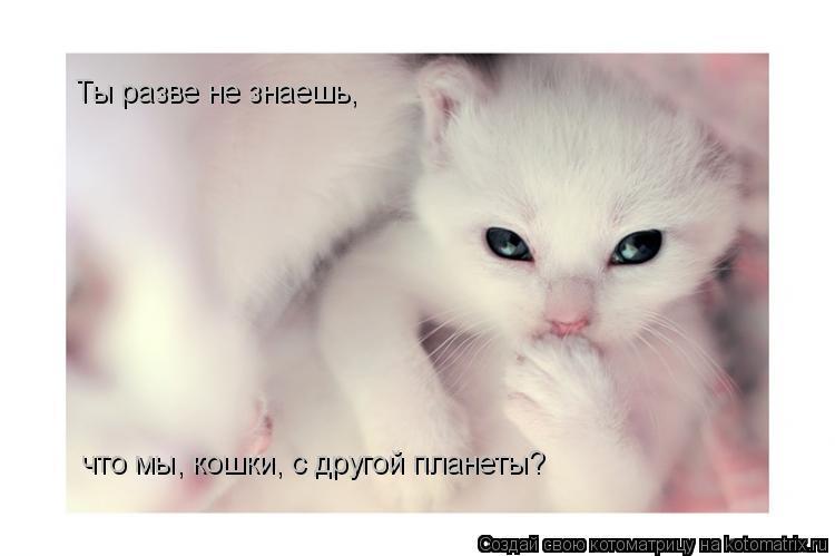 Котоматрица: Ты разве не знаешь, что мы, кошки, с другой планеты?