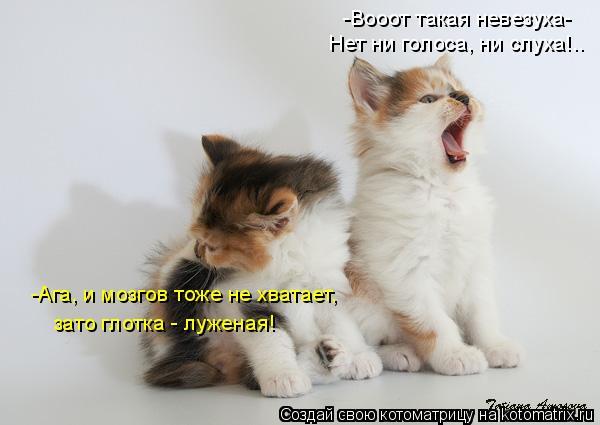 Котоматрица: -Вооот такая невезуха- Нет ни голоса, ни слуха!.. -Ага, и мозгов тоже не хватает, зато глотка - луженая!