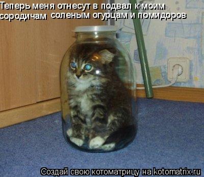Котоматрица: Теперь меня отнесут в подвал к моим сородичам соленым огурцам и помидоров