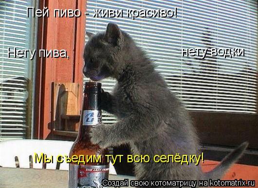 Котоматрица: Пей пиво - живи красиво! Нету пива, нету водки Мы съедим тут всю селёдку!
