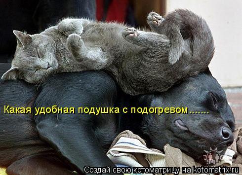 Котоматрица: Какая удобная подушка с подогревом.......