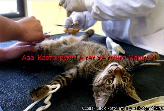 Котоматрица: Ааа! Кастрируют! А как же кошка Машка?!