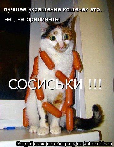 Котоматрица: лучшее украшение кошечек это.... нет, не брилиянты СОСИСЬКИ !!!