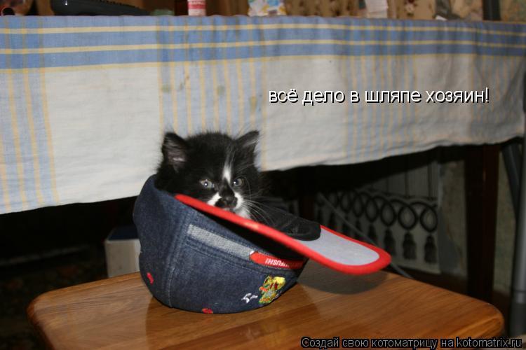Котоматрица: всё дело в шляпе хозяин!