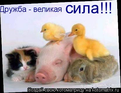 Котоматрица: Дружба - великая  сила!!!
