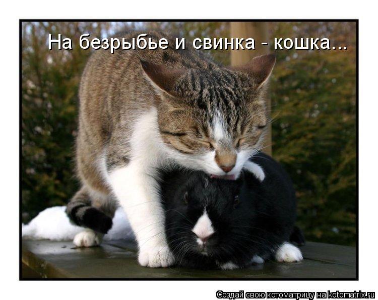 Котоматрица: На безрыбье и свинка - кошка...