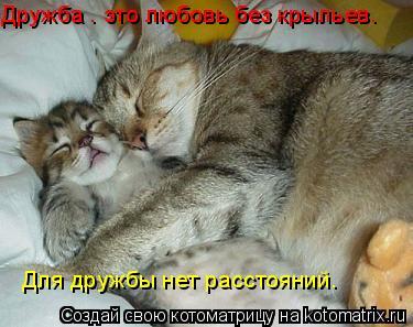 Котоматрица: Дружба – это любовь без крыльев.  Для дружбы нет расстояний.