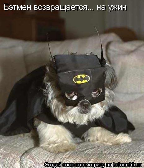 Котоматрица: Бэтмен возвращается... на ужин