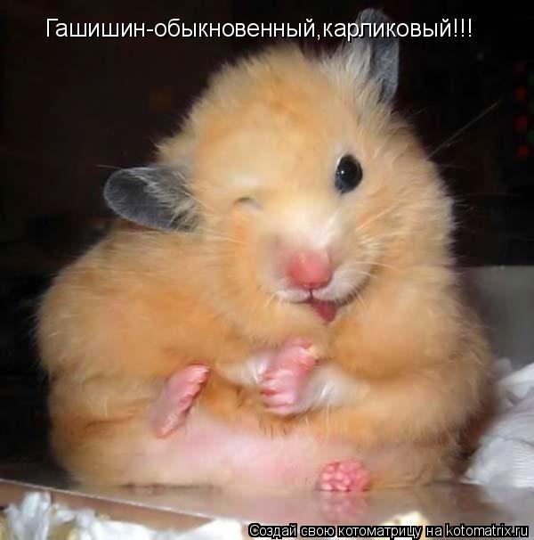 Котоматрица: Гашишин-обыкновенный,карликовый!!!