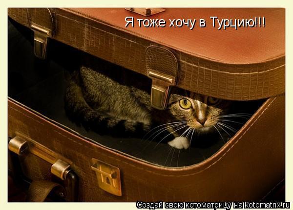 Котоматрица: Я тоже хочу в Турцию!!!