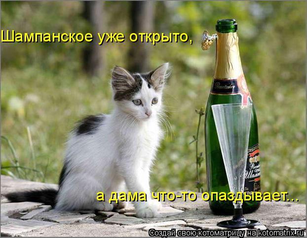 Котоматрица: Шампанское уже открыто,  а дама что-то опаздывает...